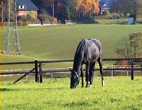 Familie Eßman, Pferdepension, Pferdezucht, Münsterland